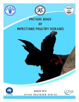 PICTURE BOOK OF INFECTIOUS POULTRY DISEASES pot