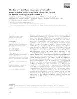 Báo cáo Y học: The Emery–Dreifuss muscular dystrophy associated-protein emerin is phosphorylated on serine 49 by protein kinase A pptx