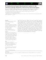 Báo cáo khoa học: A cryptochrome-based photosensory system in the siliceous sponge Suberites domuncula (Demospongiae) docx