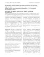 Báo cáo Y học: Identification of mammalian-type transglutaminase in Physarum polycephalum Evidence from the cDNA sequence and involvement of GTP in the regulation of transamidating activity potx
