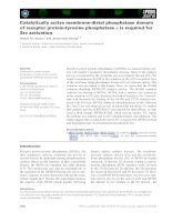Báo cáo khoa học: Catalytically active membrane-distal phosphatase domain of receptor protein-tyrosine phosphatase a is required for Src activation doc