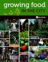 Growing food in the city pot
