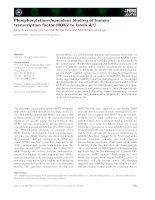Báo cáo khoa học: Phosphorylation-dependent binding of human transcription factor MOK2 to lamin A⁄C pot