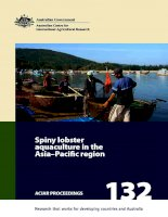 Spiny lobster aquaculture in the Asia-Pacific region