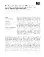 Báo cáo khoa học: The chloroplast ClpP complex in Chlamydomonas reinhardtii contains an unusual high molecular mass subunit with a large apical domain doc
