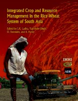 integrated crop and resource management in the rice wheat system of south asia doc