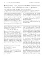 Báo cáo Y học: Bromoperoxidase activity of vanadate-substituted acid phosphatases from Shigella flexneri and Salmonella enterica ser. typhimurium doc