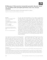 Báo cáo khoa học: N-Glycans of the porcine nematode parasite Ascaris suum are modified with phosphorylcholine and core fucose residues pot