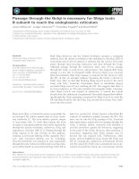 Báo cáo khoa học: Passage through the Golgi is necessary for Shiga toxin B subunit to reach the endoplasmic reticulum pptx