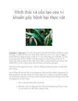 Hình thái và cấu tạo của vi khuẩn gây bệnh hại thực vật pdf