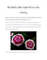 Bài thuốc chữa bệnh từ hoa cẩm chướng pot
