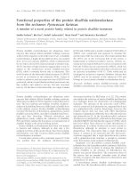 Báo cáo khóa học: Functional properties of the protein disulfide oxidoreductase from the archaeon Pyrococcus furiosus A member of a novel protein family related to protein disulfide-isomerase doc