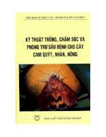 Kỹ thuật trồng, chăm sóc và phòng trừ sâu bệnh cho cam quýt, nhãn, hồng potx
