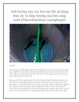 Ảnh hưởng của oxy hòa tan lên sử dụng thức ăn và tăng trưởng của tôm càng xanh (Macrobrachium rosengbergii) pot