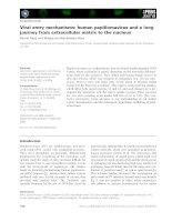 Báo cáo khoa học: Viral entry mechanisms: human papillomavirus and a long journey from extracellular matrix to the nucleus docx