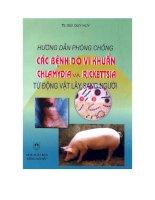 Hướng dẫn phòng chống các bệnh do vi khuẩn chlamydia từ động vật lây sang người ppt