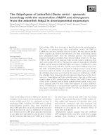 Báo cáo khoa học: The fabp4 gene of zebrafish (Danio rerio) ) genomic homology with the mammalian FABP4 and divergence from the zebrafish fabp3 in developmental expression pot