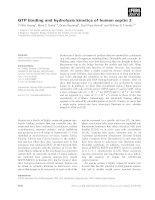 Báo cáo khoa học: GTP binding and hydrolysis kinetics of human septin 2 pot