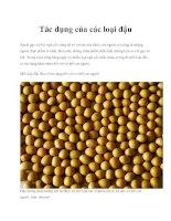 Tác dụng của các loại đậu pdf