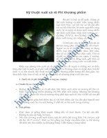 Kỹ thuật nuôi cá rô Phi thương phẩm pot