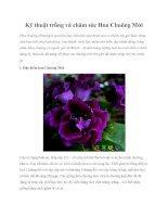 Kỹ thuật trồng và chăm sóc Hoa Chuông Mới pdf