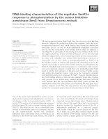 Báo cáo khoa học: DNA-binding characteristics of the regulator SenR in response to phosphorylation by the sensor histidine autokinase SenS from Streptomyces reticuli doc