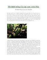 Mô hình trồng Ca cao xen vườn Dừa pptx