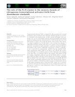 Báo cáo khoa học: The role of the Fe-S cluster in the sensory domain of nitrogenase transcriptional activator VnfA from Azotobacter vinelandii potx