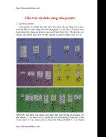 Cấu trúc và chức năng của protein doc