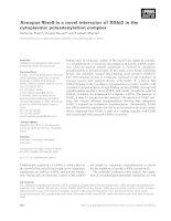 Báo cáo khoa học: Xenopus Rbm9 is a novel interactor of XGld2 in the cytoplasmic polyadenylation complex pptx