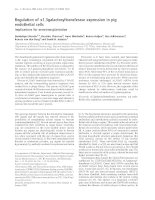 Báo cáo Y học: Regulation of a1,3galactosyltransferase expression in pig endothelial cells Implications for xenotransplantation doc