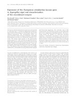 Báo cáo khoa học: Expression of the Pycnoporus cinnabarinus laccase gene in Aspergillus niger and characterization of the recombinant enzyme pdf