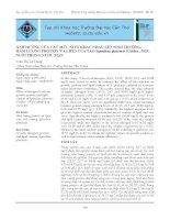 ẢNH HƯỞNG CỦA CÁC MỨC NITƠ KHÁC NHAU LÊN SINH TRƯỞNG, HÀM LƯỢNG PROTEIN VÀ LIPID CỦA TẢO Spirulina platensis (Geitler, 1925) NUÔI TRONG NƯỚC MẶN pot