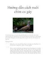 Hướng dẫn cách nuôi chim cu gáy ppt