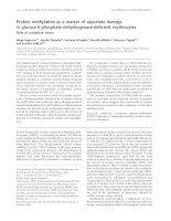 Báo cáo Y học: Protein methylation as a marker of aspartate damage in glucose-6-phosphate dehydrogenase-deficient erythrocytes docx