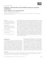 Báo cáo khoa học: Calcium, mitochondria and oxidative stress in neuronal pathology Novel aspects of an enduring theme pdf