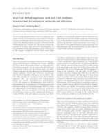 Báo cáo khóa học: Acyl-CoA dehydrogenases and acyl-CoA oxidases Structural basis for mechanistic similarities and differences pot