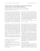Báo cáo khoa học: Unique features of the hemoglobin system of the Antarctic notothenioid fish Gobionotothen gibberifrons ppt