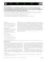 Báo cáo khoa học: Cytoskeleton-modulating effectors of enteropathogenic and enterohemorrhagicEscherichia coli: a case for EspB as an intrinsically less-ordered effector pptx