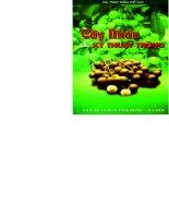 cây nhãn và kỹ thuật trồng