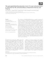 Báo cáo khoa học: The phosphatidylethanolamine level of yeast mitochondria is affected by the mitochondrial components Oxa1p and Yme1p ppt