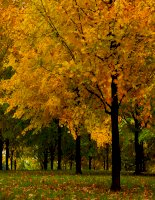 bộ sưu tập hình ảnh cảnh sắc mùa thu, autumn
