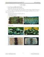 THỰC HÀNH QUẢN TRỊ KINH DOANH QUỐC TẾ - Chiến lược xuất khẩu tôm vào thị trường Mỹ doc