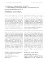 Báo cáo Y học: Purification and characterization of VanXYC, a D,D-dipeptidase/D,D-carboxypeptidase in vancomycin-resistant Enterococcus gallinarum BM4174 docx