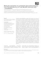 Báo cáo khoa học: Molecular imprinting of cyclodextrin glycosyltransferases from Paenibacillus sp. A11 and Bacillus macerans with c-cyclodextrin pptx