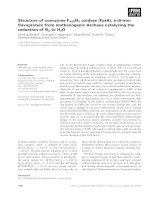 Báo cáo khoa học: Structure of coenzyme F420H2 oxidase (FprA), a di-iron flavoprotein from methanogenic Archaea catalyzing the reduction of O2 to H2O ppt