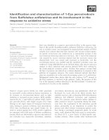 Báo cáo khoa học: Identification and characterization of 1-Cys peroxiredoxin from Sulfolobus solfataricus and its involvement in the response to oxidative stress pdf