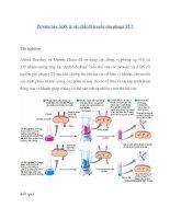 Protein hay ADN là vật chất di truyền của phagơ T2 ? doc