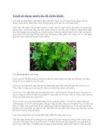 Cách sử dụng ngải cứu để chữa bệnh pdf