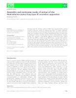 Báo cáo khoa học: Assembly and molecular mode of action of the Helicobacter pylori Cag type IV secretion apparatus doc